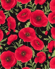 Tuscan Poppies - Radiant in Red - Quilt Fabrics from www.eQuilter.com