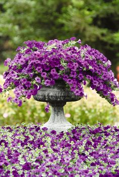 Choosing the Best Annual Flowers for your Garden