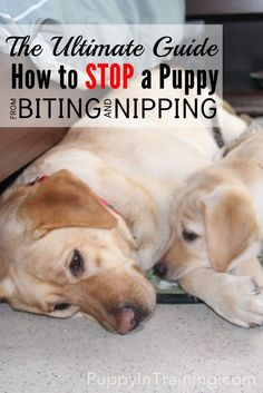 How to stop a puppy from biting and nipping! @puppyintraining