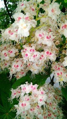Bylinná směs na lymfatický systém: Lymfa - pojem před cca 20 lety téměř. Detox, Life Is Good, Dandelion, Floral Wreath, Herbs, Health, Nature, Flowers, Plants
