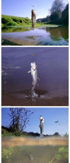 Fish jumping put from water