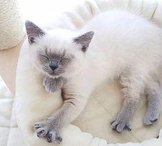 Wie merke ich das meine Katze erkältet ist? Hier die Symptome