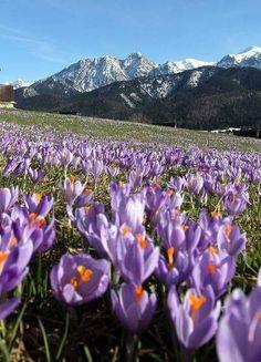 Spring time in Tatra Mountain, Poland