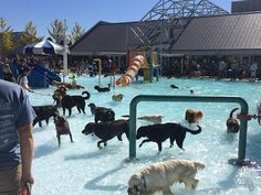 These puppies who had the ultimate pool party. | 39 Adorable Pictures You Need To Stop And Look At Right This Second