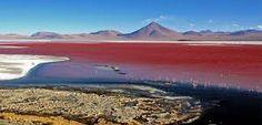 Resultado de imagem para flamingos deserto de atacama