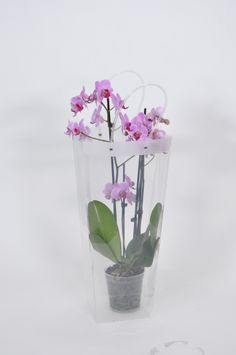 #orchid #packaging #back