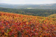 Couleurs automnales - Photographies Patrick Jassiones Vineyard, Champagne, Outdoor, Photographs, Landscapes, Colors, Outdoors, Vine Yard, Vineyard Vines