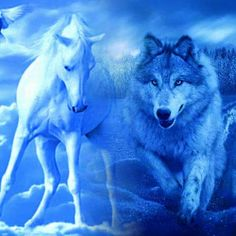 Wolf Photos, Wolf Pictures, Fantasy Pictures, Art Pictures, Wolf Spirit, Spirit Animal, Beautiful Wolves, Animals Beautiful, Fantasy Wolf
