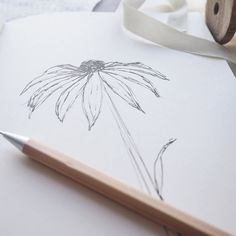 One from the sketchbook. A daisy to cheer up a very grey day here!