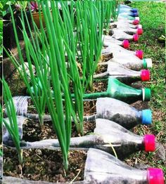 Recycle soda bottles to plant food! (I might have to raid some recycle bins since we don't drink soda at my house)