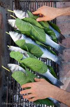 In Greece, fish wrapped in fig leaves.  Photo by Penny De Los Santos, for Saveur.