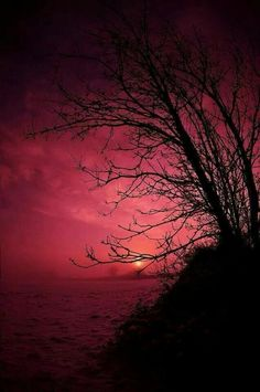 Tree silhouette / red background / Beautiful nature photography