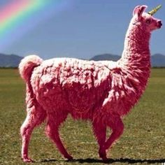 a llama and a unicorn mixed together. AHHHH. #bestthingever