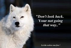 Not that way Strong Quotes, Wise Quotes, Positive Quotes, Inspirational Quotes, Wolf Qoutes, Lone Wolf Quotes, Native Quotes, Wolf Spirit Animal, Wolf Love