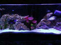 My first saltwater aquarium set up 2011. Led lights are amazing. The tank has changed over the past two years.