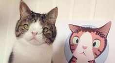 Monty the cat, who was born without a nasal bridge, which means his nose doesn't have bone. Like other cat on istagram, he has huge fans.