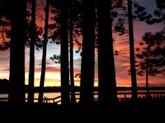 sunsets and trees. love.