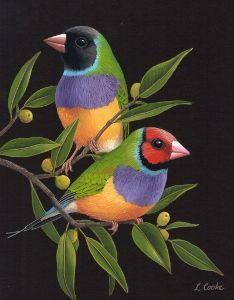 Specializing in Wildlife, Birds, Ballarat Victoria Australia Pretty Birds, Beautiful Birds, Bird Quilt Blocks, Ariana Grande Drawings, Farm Paintings, Bird Artwork, Tropical Art, Australian Animals, Bird Illustration