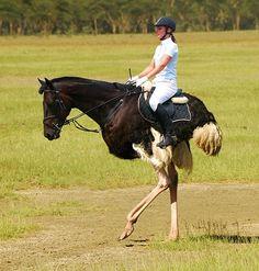Horse-Trige