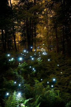 Fireflies and Ferns = magical!