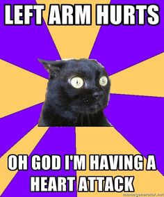 OMG. Anxiety cat understands me.