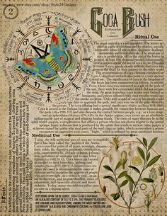 Coca Bush Book of Shadows page, Ritual Poisonous Plants - İnteresting İnformation And Curiosities Wiccan Magic, Wiccan Spells, Poisonous Plants, Medicinal Plants, Grimoire Book, Herbal Magic, Witch Spell, Book Of Shadows, Occult