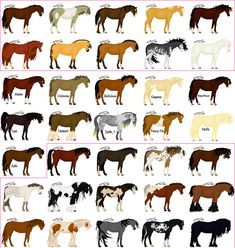 horse colors - Bing images