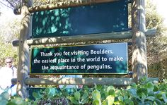 Visit Boulders Beach in Cape Town, the only place on earth where you can get up close to the endangered African Penguin - a bird that epitomises love. African Penguin, Boulder Beach, Cape Town, Bouldering, Meet, Birds, Earth, Love, World