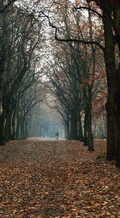 Berlin Grunewald forest....