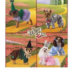 Simplicity 2548 - Wizard of Oz Dog Clothes Sewing Pattern - Dog Coat Pattern - Dog Hat Pattern - Dog Costume Pattern - Uncut, FF