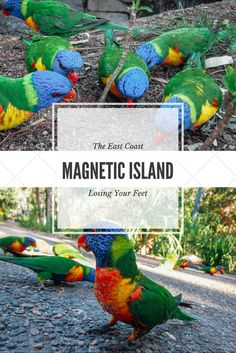 Magnetic Island: Echidnas and parrots and wallabies, oh my!