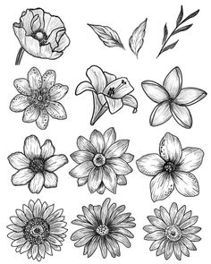 Art Sketchbook Ideas Pencil – Art World 20 Simple Flower Drawing, Easy Flower Drawings, Flower Art Drawing, Pencil Drawings Of Flowers, Flower Sketches, Floral Drawing, Pencil Art Drawings, Doodle Drawings, Art Drawings Sketches