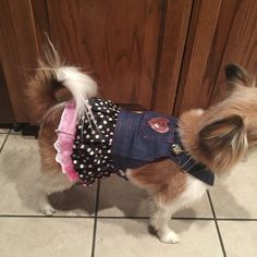 Polka dots blue jeans doggy overall dress NWP Blue jeans polka dot cute  doggy dress fits for dog up to 8 lbs new in packageprice is firm  Other