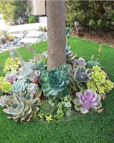 50 Green Backyard and Front Yard Landscaping Ideas - Hinterhof Garten landschaft - Paisagismo Succulent Landscaping, Succulent Gardening, Front Yard Landscaping, Succulents Garden, Landscaping Ideas, Mulch Landscaping, Landscaping Borders, Balcony Gardening, Fairy Gardening