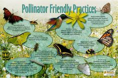 these are the animal that pollinates the plants and help them grow.