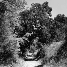 A group of Puente Hills teenagers was hiking through Turnbull Canyon and came across the asylum...