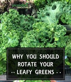 You've probably heard it before, and I say it often – rotate your greens! But why? Why not just have the same two handfuls of spinach in every green smoothie you make, day in and day out? Well, there are a couple reasons. 1 – Some Greens Are More Nutritious Than Others First of all, …