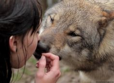 White Wolf: The Mysterious Connection Between Wolves and Women (Video)