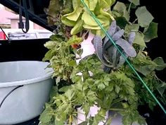 Getting ready to transport the Tower Garden. Don't have one? visit: www.cstolle.towergarden.com