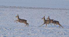 'uprk' by jakubferenk Kangaroo, My Photos, Animals, Baby Bjorn, Animales, Animaux, Animal, Animais