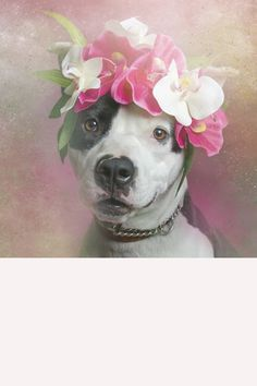 These pitbulls in flower crowns are Coachella ready.