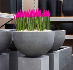Sansevieria velvet touch 45 cm | Terrapalme Heim- und Gartenshop Sansevieria Plant, Blue Succulents, Shops, Garden Landscaping, Indoor Plants, Planter Pots, Landscape, Velvet, Gardening