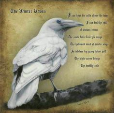 The Winter Raven.  Though I am loathe to pin pics that contain spelling and…
