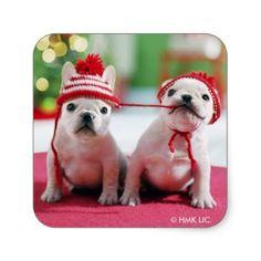 #White French Bulldogs With Hats Square Sticker - #bulldog #puppy #bulldogs #dog #dogs #pet #pets