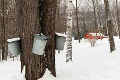 Sap buckets for Pease Scenic Valley Maple Sugar House in Orford, New Hampshire, courtesy Wes Lavin.
