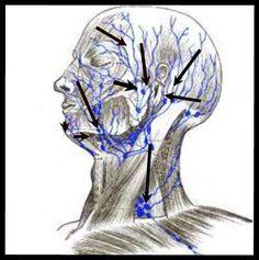 Circulación linfática facial.