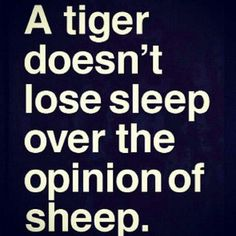 a tiger doesn't lose sleep over the opinion of sheep - anonymous