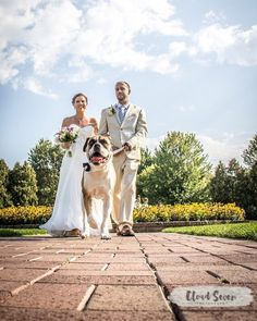 The Trio. Bride and groom and man's best friend! #dogs #mansbestfriend #wedding #weddingphotography #bride #groom #summer #wisconsin #wisconsinphotographer #flowers #beautiful #woofwoof