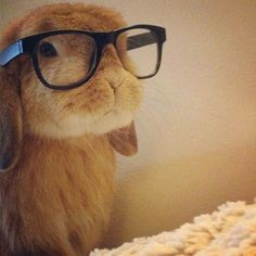 Cute bunny with glasses