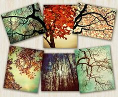 Tree Photography home decor nature prints autumn color - Forest For The Trees - 6 art prints set  - 5x7 and 5x5 photographs. $45.00, via Etsy.